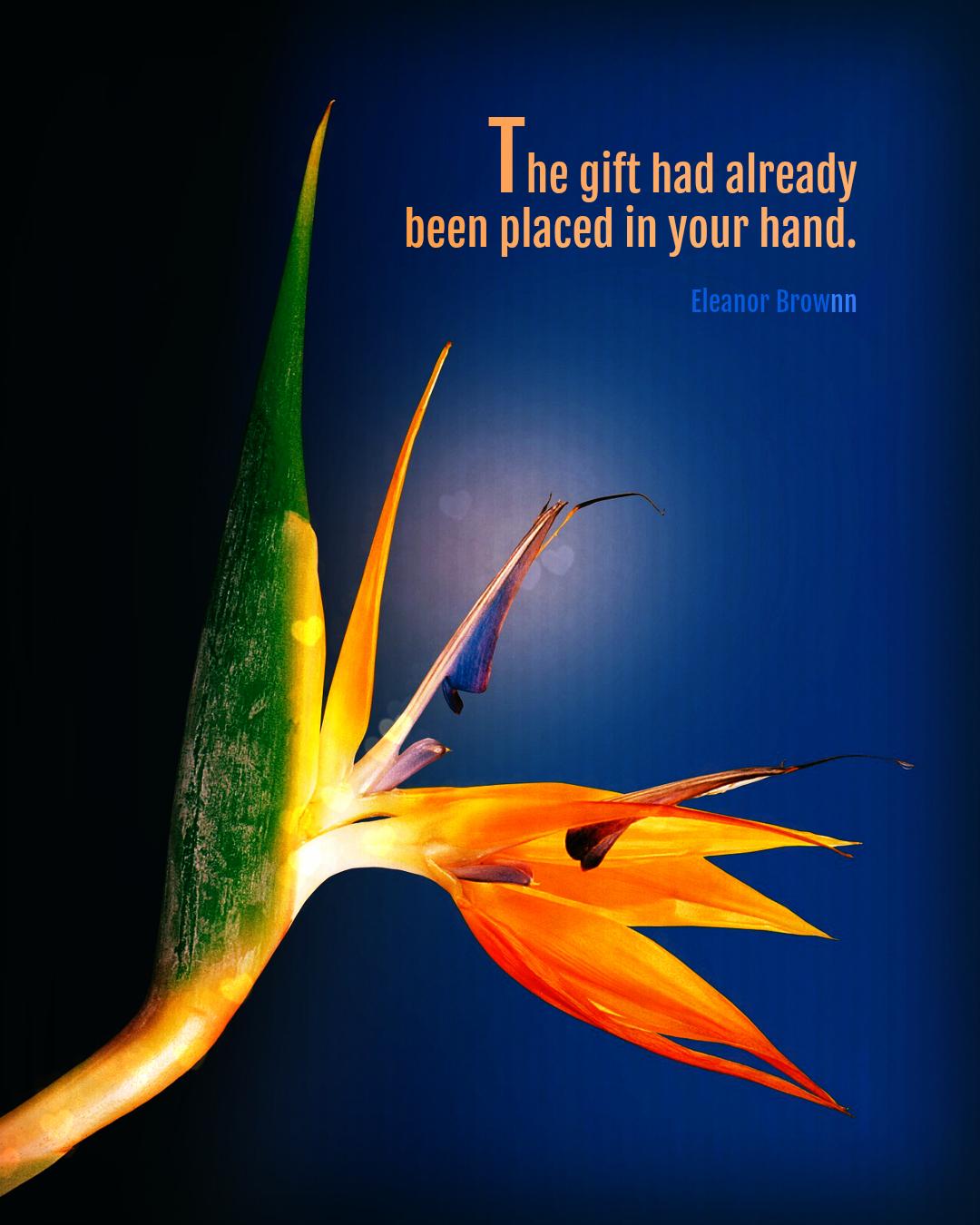 Eleanor-Brownn-Unopened-Gifts